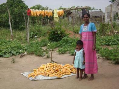 spme%20maize%20seeds%20preserved-Mulliwadduvan-19th%20Feb.jpg